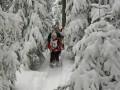 Schneeschuhtour über den Schweizberg