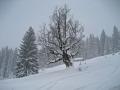 Skitouren Alpe Birkach