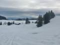 Schneeschuhtour auf der Adelegg