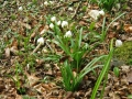 Frühlingswanderung im Brieler Tal