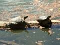 Wanderungen um den Kalterer Seee