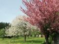 Blütenwanderung bei Bodnegg