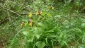 Orchideenwanderung bei Beiningen