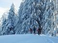 tief verschneiter Winterwald